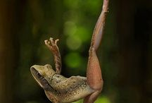 Grenouille / Beautiful frog