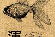 Freddiefish