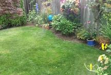 Dana's Garden / My Green Thumb;-)