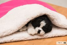 Pet Pockets (sleeping bags)