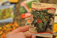 Seeds | Flowers and Vegetables / I'm a seed addict.... I love to eat them and grow them!  Here is a board filled with my favorite seeds to eat, grow into spectacular plants in your garden and home.  Edible and ornamental plants can be grown from seeds and also organic gardening.