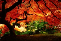 Trees - Paintings, photographs et al / by Janis Greener