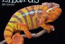 2015 Lizards Calendar / by MegaCalendars.com