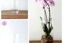 Orchideen und Co