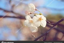 AFE IMAGES - Stock Images / Stock images, stock illustrations, Nautical, beaches, nature, flowers,