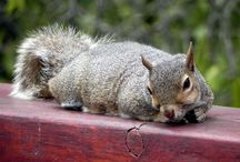 #Squirrels4Good / by National Wildlife Federation