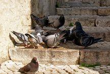 ptaszarnia / z góry muszę zapowiedzieć - nie znam się na ptakach, nie rozpoznaję ich - no może z grubsza wiem, który to wróbel, gołąb, wrona - to pozostawiam innym. lubię jednak na nie patrzeć no i fotografować. tu, trochę ptactwa rodzimego i z podróży. zapraszam