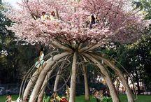 drzewa nietypowo