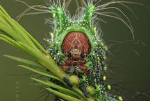 Caterpillar&Moths