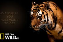 Tier Dokumentarfilm
