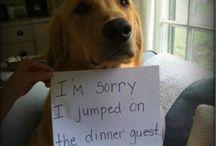 Dog Shaming / by Rebecca Stevens