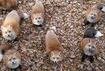 Fox love ♡