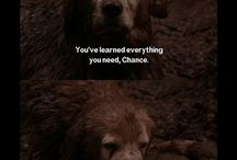 Homeward bound quotes