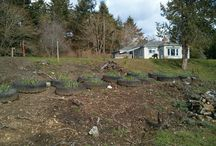 My veggie gardens