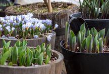 Trädgårds bloggar
