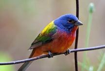 Birds: Various / by Amanda Miller-Robertson
