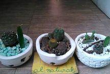 Plantas AL NATURAL