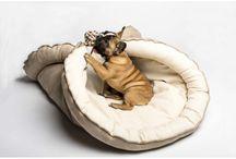 Accessoire pour chiens