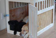 Idées pour les chiens