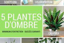 plantes vertes d'ombre pour intérieur