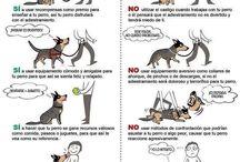 Adiestramiento canino.