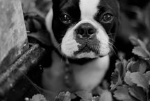 Charleston Pets at Weddings - Kate Timbers Photography / What is better than having your furry little buddy to be with you in Charleston when you exchange vows? Here are the favorite photos of dogs attending weddings that I've captured!