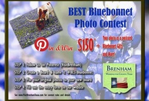 BESTBluebonnet Photo Contest WINNERS! / This board is reserved for the WINNERS of the #BESTBluebonnet Photo Contest of 2013. Congratulations to JB Manning, Murry Grigsby, Kimberly Caldwell-Williams, and Tracy Patton!