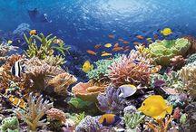 Rafy koralowe, dziwne zwierzęta podwodne