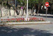 egynyári tavasz