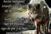 lobo & cia
