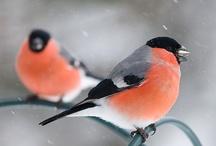 Bird. Bird. Bird. Bird is the word.