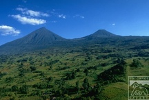 Uganda / by Volcanoes Safaris