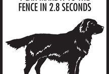 Flat-Coated Retriever Signs and Pictures / Warning and Caution Flat-Coated Retriever Dog Signs. https://www.signswithanattitude.com/flat-coated-retriever-signs.html