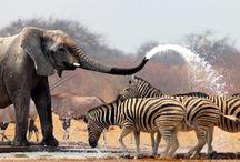 Best Safari tours in Botswana / Safari embassy offers the best Safari tours in Botswana in affordable prices. for more details visit: http://www.safariembassy.com/destination/botswana/