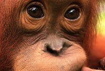 Dolphins & Orangutans...:D