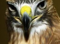 Wild Bird Rescue/Rehabilitation/Release
