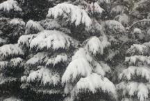Winter / by Ramona L.B