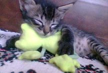 Piteko e seus irmãos / Fotos comuns de gatinhos comuns... mas lindos!