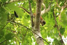 Wildlife / Animals spotted around the world