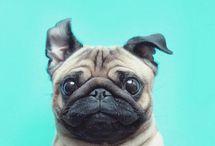 Puppy ;)