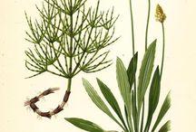 Botanische Abbildungen