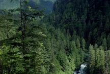 Pacific Northwest / Washington & Oregon coastlines / by Paula Ottenbreit
