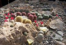 Kaktusy z Mexika / pestovanie kaktusov a iných exotických rastlín z Mexika