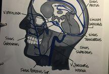Medicin / Drawings'n notes