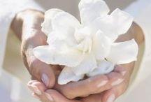 Flores _ encanto, cores, perfumes...