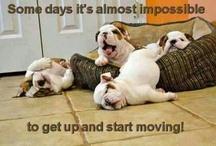 LUSTIGES rund um den Hund / Lustige Hunde, lustiges Zeugs!