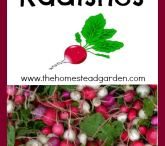 Gardening - Carrots, Radishes, Beets and Rutabagas