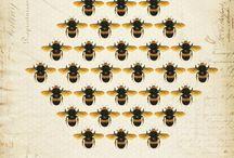 Honeycomb & bees