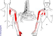 Muscle trigger points etc.