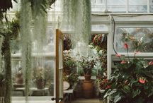 Plantwave
